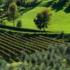 Itinerario Garda – Lombardia