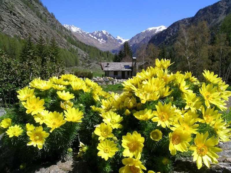 Cogne – Valle d'Aosta