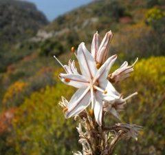 Ecoturismo in Sardegna – Sardegna