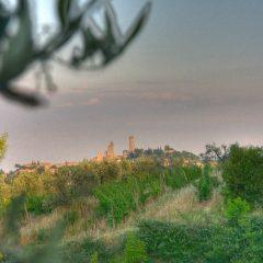 Azienda Agricola Biologica Il Castagnolino – Toscana