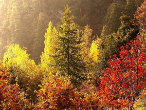 Spettacolo d'autunno – Valle d'Aosta