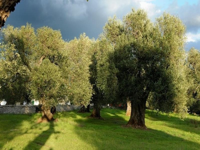 Case in Italia