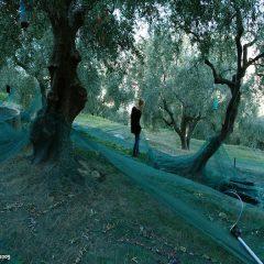 Azienda Agricola San Martino – Agriturismo La Quercia