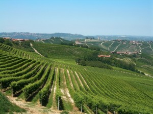 Racconto di vino