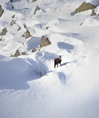 Ecoturismo nel Gran Paradiso – Valle d'Aosta