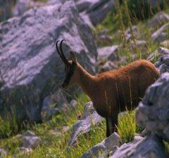 Animali protagonisti – Abruzzo