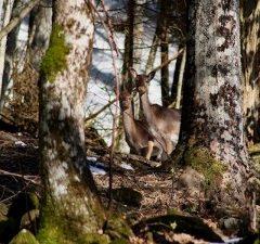 Foreste Casentinesi – Toscana