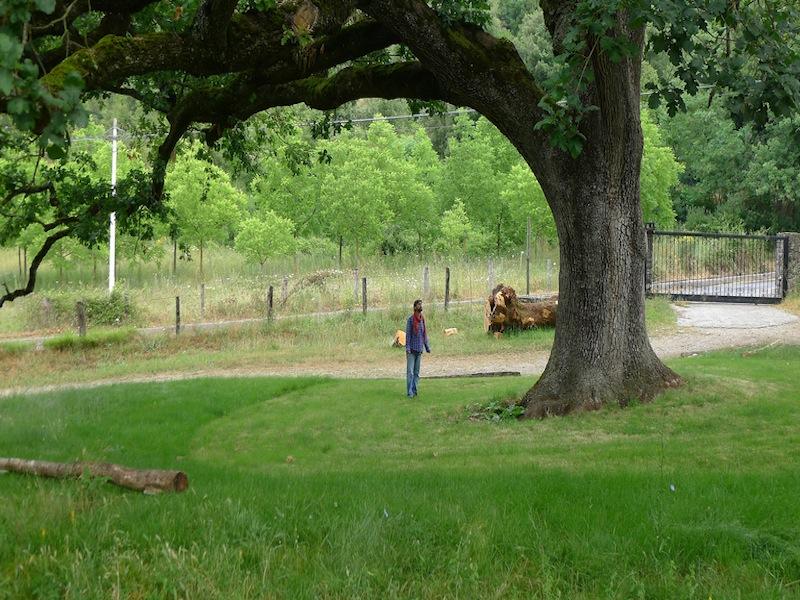 la quercia di licari