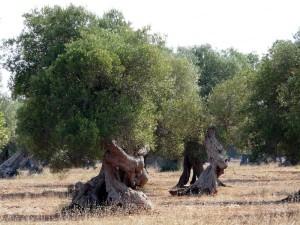 Ecoturismo nel Tacco d'Italia – Puglia