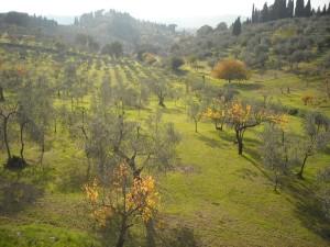 Il biologico toscano – Toscana