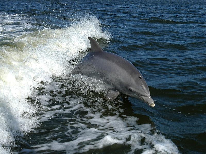 Whalewatching – Liguria