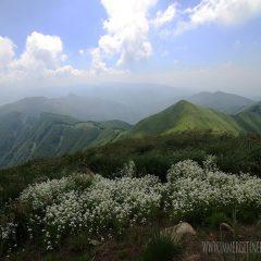 La natura nella montagna pistoiese