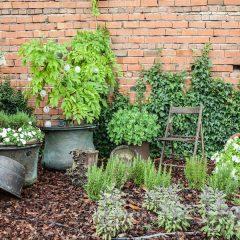 Le Vigne di Corvino – Eco Convenzione