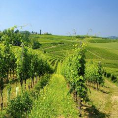 Azienda Agricola Accornero – Piemonte