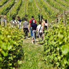 Wine Trekking in Franciacorta