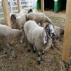 Rural Festival: la biodiversità in mostra nel Chianti
