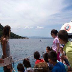 Golfo Aranci, la baia dei delfini