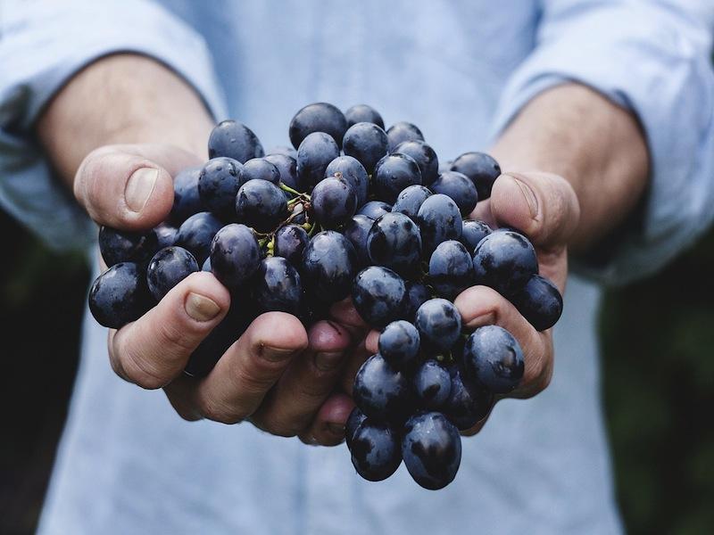 Vignaioli e Sorelle per il vino – Veneto