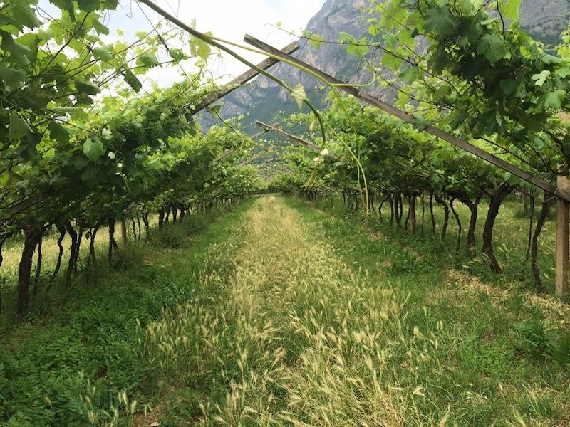 Redondel, il vino sincero