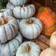 A tavola con… prodotti e appuntamenti d'autunno
