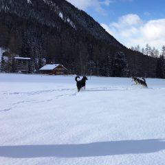 A spasso con Matisse… sulla neve