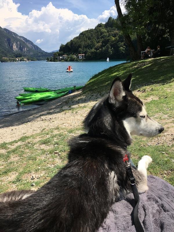 In vacanza sul lago di Ledro con Matisse