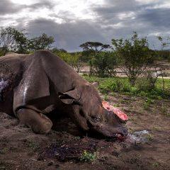Wildlife: nell'obiettivo la salvaguardia del pianeta