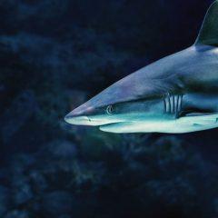 No alla zuppa di pinne di squalo