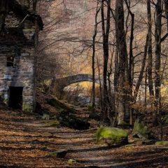 PEFC premia le foto delle foreste italiane