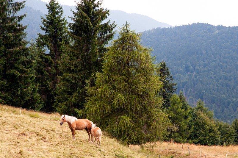 In Val Trompia per una vacanza slow