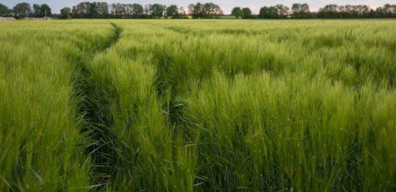 Green economy in Lombardia